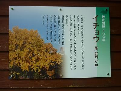 P1100959.jpg